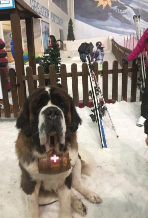 hugo-awaiting-skiing