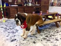 Hugo having a rest at the Ski Centre