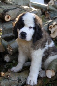boy-pup-1