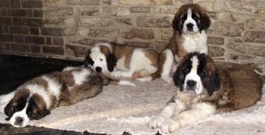 puppies-barn